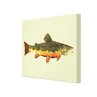 Brook Trout Stretched Canvas Print