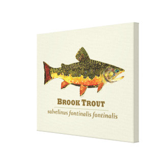 Brook Trout Stretched Canvas Prints