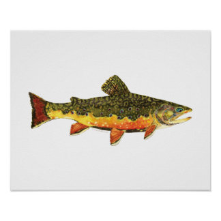 Brook Trout Fish Painting Poster