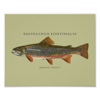 Brook Trout Fishing Poster