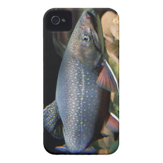 Brook Trout - iPhone 4/4S Cover