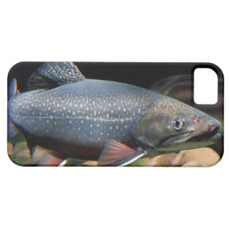 Brook Trout iPhone Cover