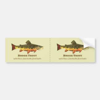 Brook Trout, Latin Bumper Sticker