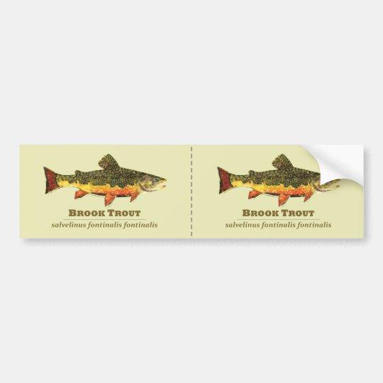 Brook Trout, Latin Bumper Sticker
