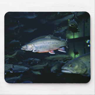 Brook trout mouse pad