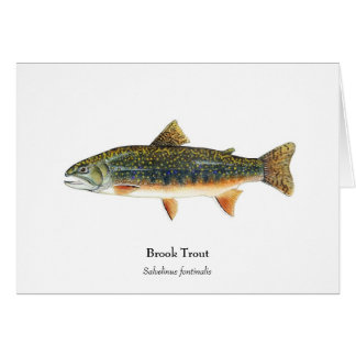 Brook Trout Notecard