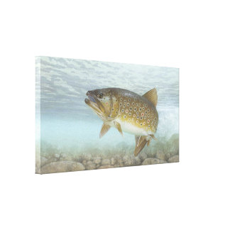 Brook Trout Painting Canvas Print