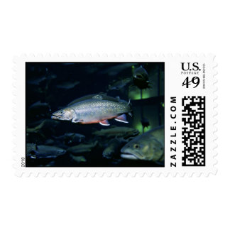 Brook trout postage stamps