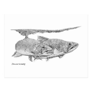 Brook Trout Post Cards