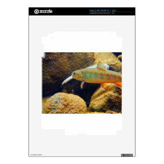 Brook Trout iPad 2 Decal
