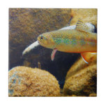 Brook Trout Small Square Tile
