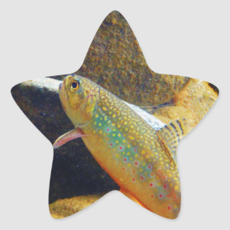 Brook Trout Star Sticker