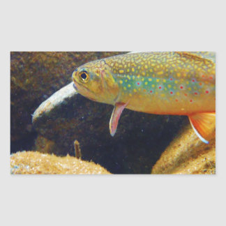 Brook Trout Rectangle Stickers