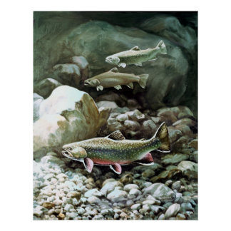 brook trout swimming poster