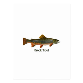 Brook Trout (titled) Postcard