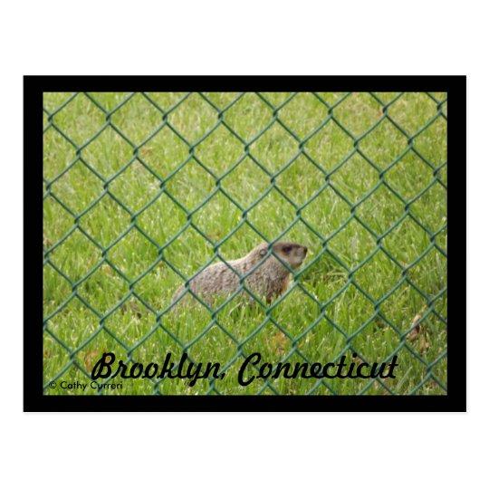 Brooklyn,Connecticut Postcard