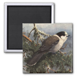 Square Magnet with Brooks' Gray Jay In Pine design