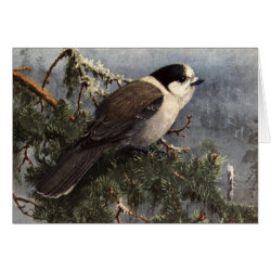 Greeting Card with Brooks' Gray Jay In Pine design
