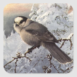 Square Sticker with Brooks' Gray Jay in Snow design
