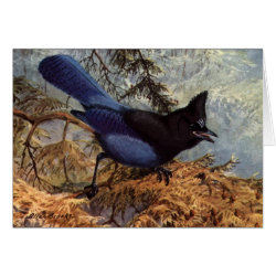 Greeting Card with Brooks' Steller's Jay design