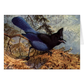 Brooks' Steller's Jay Greeting Card