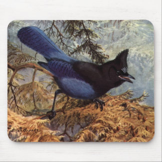 Brooks' Steller's Jay Mouse Pad