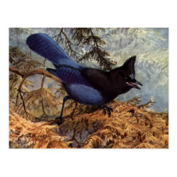 Postcard with Brooks' Steller's Jay design
