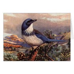 Greeting Card with Brooks' Western Scrub-jay design