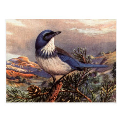 Postcard with Brooks' Western Scrub-jay design