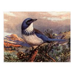 Postcard with Brooks' Western Scrub-jay design