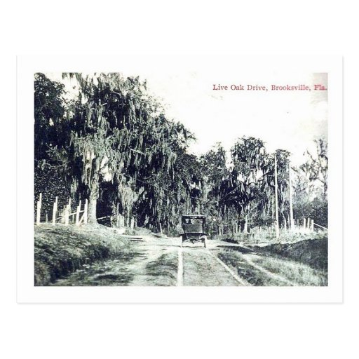 Brooksville Florida, Live Oak Drive, Vintage Postc Postcard