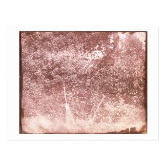 Broom and Spade, 1842 (b/w photo) Postcard