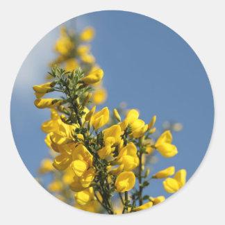 Broom Scotch Wildflowers Classic Round Sticker