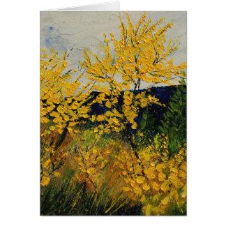 brooms shrubs cards