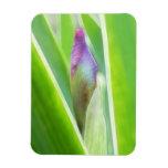 Brote a florecer - iris imanes flexibles