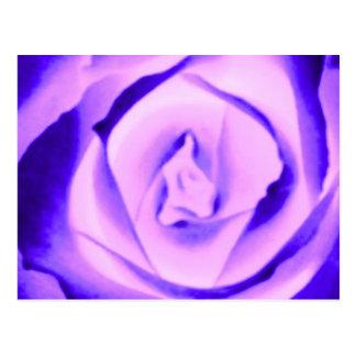 Brote color de rosa púrpura postales