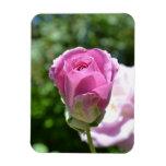 Brote color de rosa romántico imán
