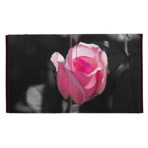 Brote color de rosa rosado BW