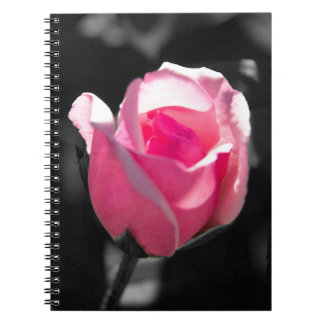 Brote color de rosa rosado BW Libretas Espirales