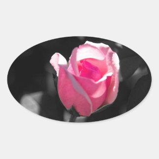 Brote color de rosa rosado BW Pegatina Ovalada