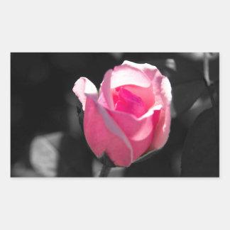 Brote color de rosa rosado BW Pegatina Rectangular