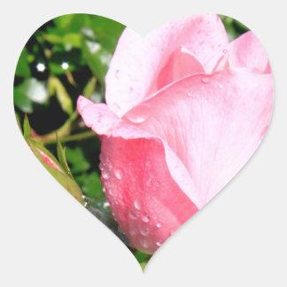 Brote color de rosa rosado con descensos del agua pegatina en forma de corazón
