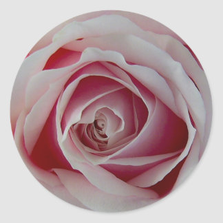 Brote color de rosa rosado pegatina redonda