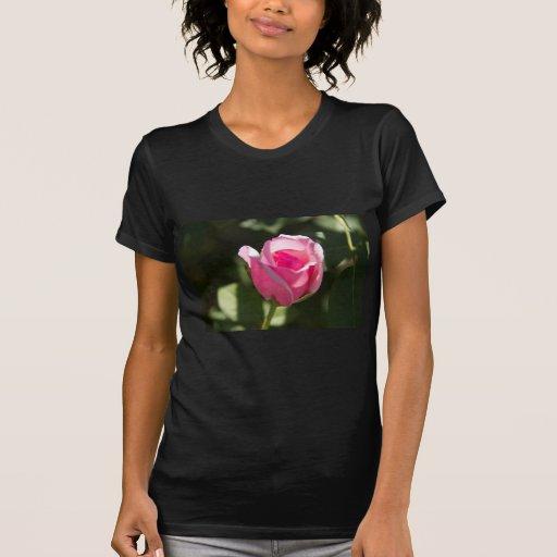 Brote color de rosa rosado t-shirt