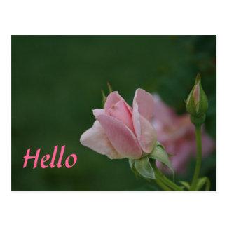 Brote color de rosa rosado tarjetas postales
