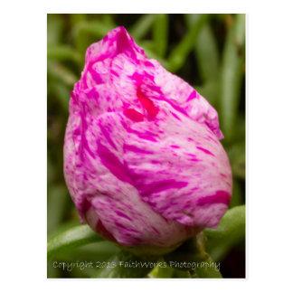 Brote color de rosa salvaje postales