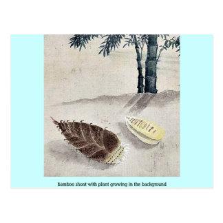 Brote de bambú con la planta que crece en el fondo tarjetas postales
