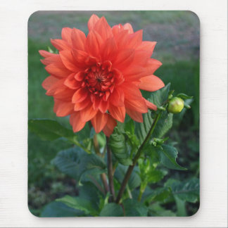 Brote de flor anaranjado grande de la dalia alfombrilla de ratones