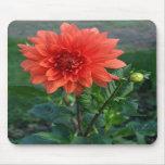 Brote de flor anaranjado grande de la dalia tapete de ratones