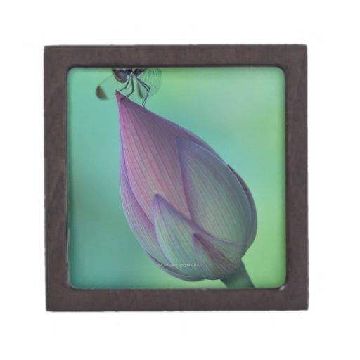 Brote de flor de Lotus y una libélula Cajas De Recuerdo De Calidad